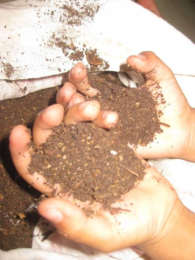 sweet compost handled by my child