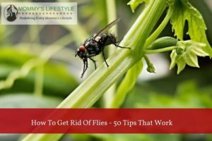 How To Get Rid of Flies – 50 Tips That Work